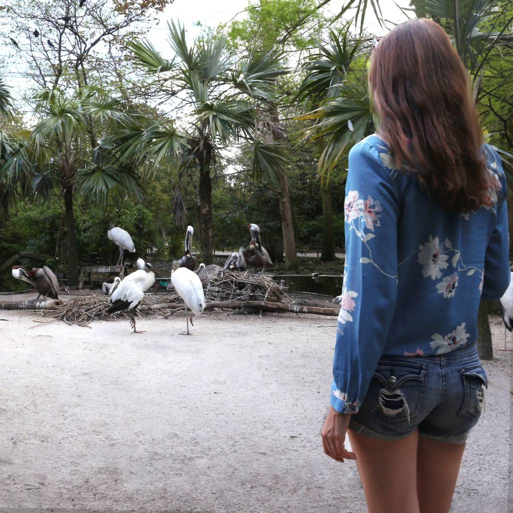 Flamingo Gardens and Wildlife Sanctuary is a great place to visit with children outside of Fort Lauderdale.