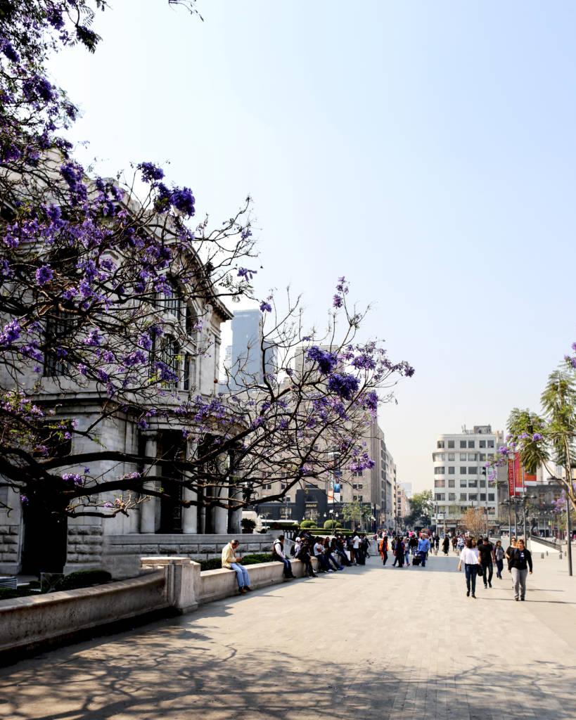 Flowering Trees by the Palacio De Bella Artes