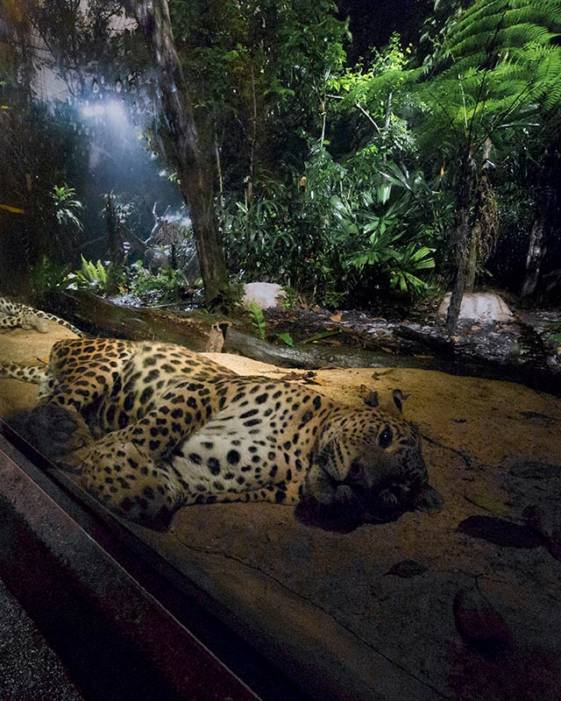 What to do in Singapore in 2 days - visit the night safari.