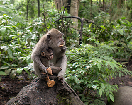 bali island trip monkey jungle ubud