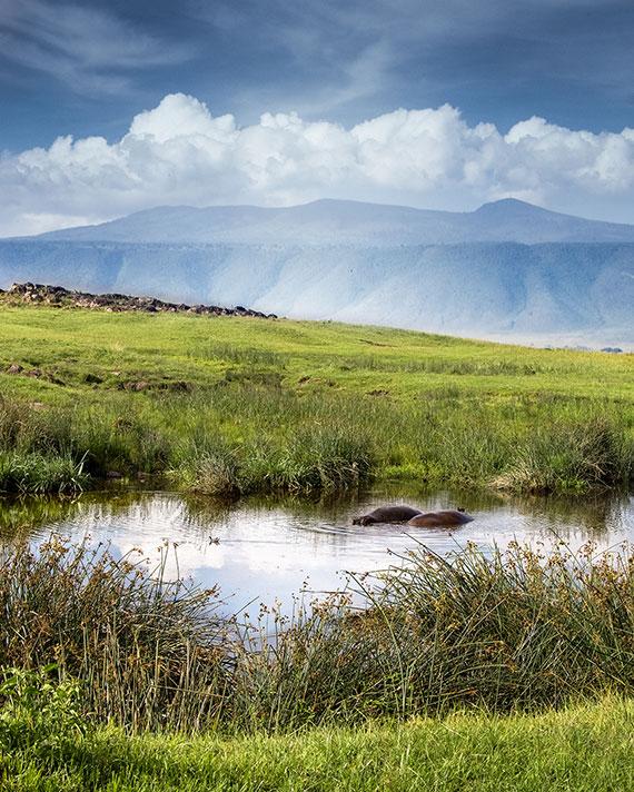 hippos lounging in water on tanzania safari