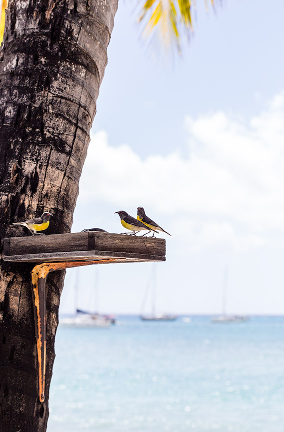 birds at carlisle bay hotel