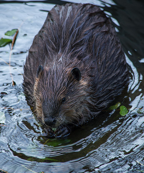 things to do in vancouver - watch the wildlife