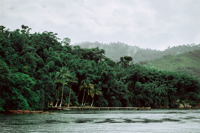 The jungle as seen off a boat in Paratay.  Green trees, water.