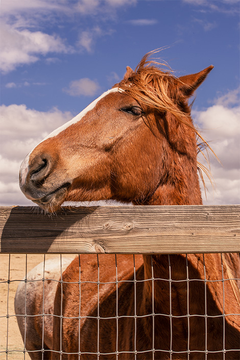 a horse in the lifesavers wild horse rescue center facility.