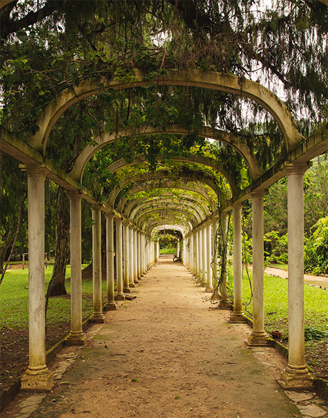 rio botanical gardens - best things to do in brazil