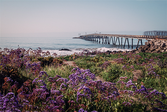 a swarm of blooming flowers in the foreground, the ocean in the background.  Towards the horizon stretches a long but narrow bridge. Best lightweight carry-on luggage - California