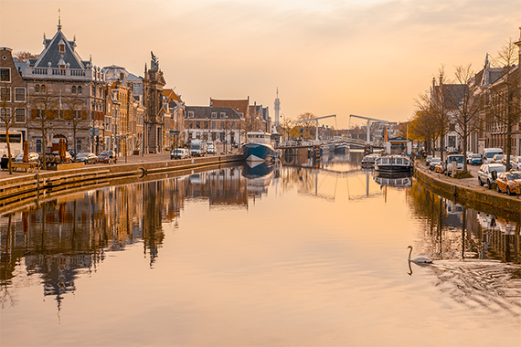 things to do in the netherlands - haarlem landscape, canal, buildings, swan in the foreground.