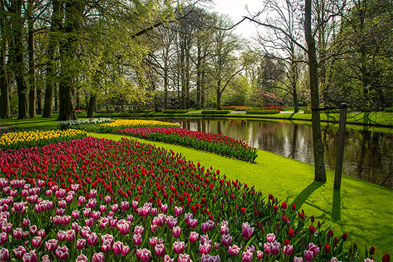 things to do in the netherlands keukenhof gardens, tullips and flowers
