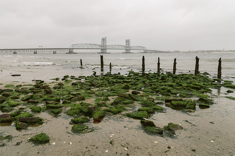 In the foreground, seaweed covered rocks.  Behind them, wooden poles placed vertically in the sand, water, and a bridge.