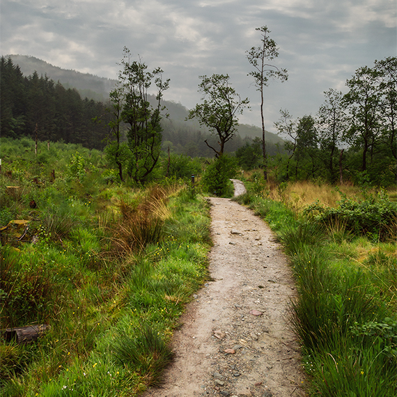 A narrow hiking trail leading into the distance, thick grass and a few thin leafed trees surround the trail, mountains in the background.  The trail is wet with rain.  Things to do on Isle of Skye - hiking