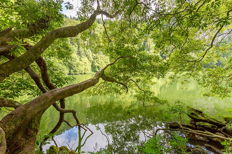 A peaceful green lake with trees leaning over it.