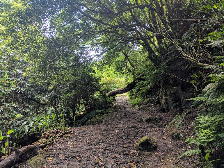 A beautiful hiking trail surrounded by trees in Lagoa Do Congro, Sao Miguel, Azores, Portugal.