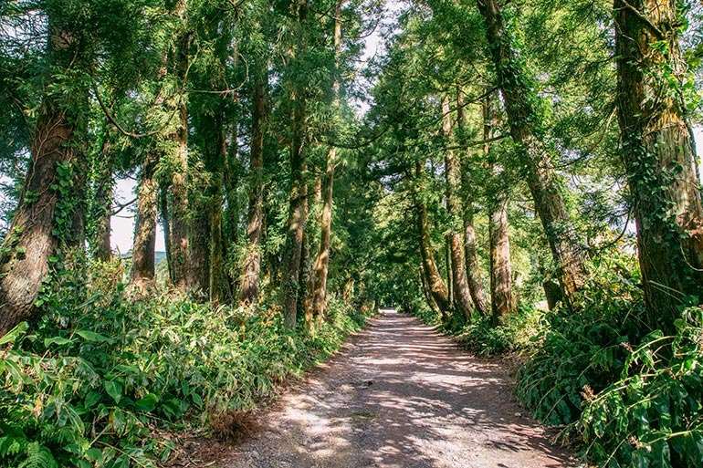 A peaceful hiking trail surrrounded by large trees in Lagoa Do Congro, Sao Miguel, Azores, Portugal.