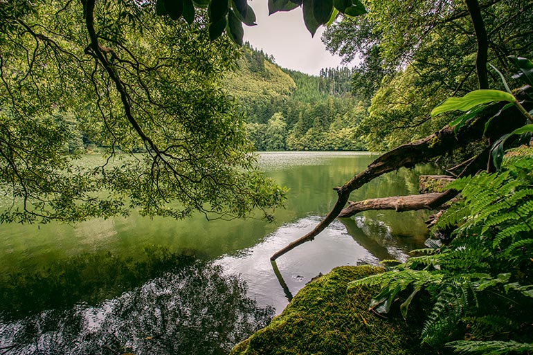 A beautiful green lake with trees, branches and grass in Lagoa Do Congro, Sao Miguel, Azores, Portugal.