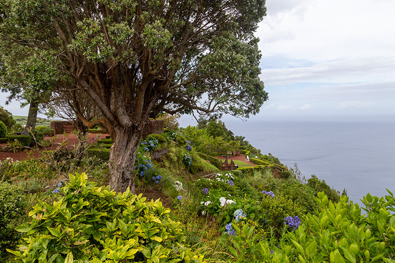 An old tree on a cliff surrounded by flowers.