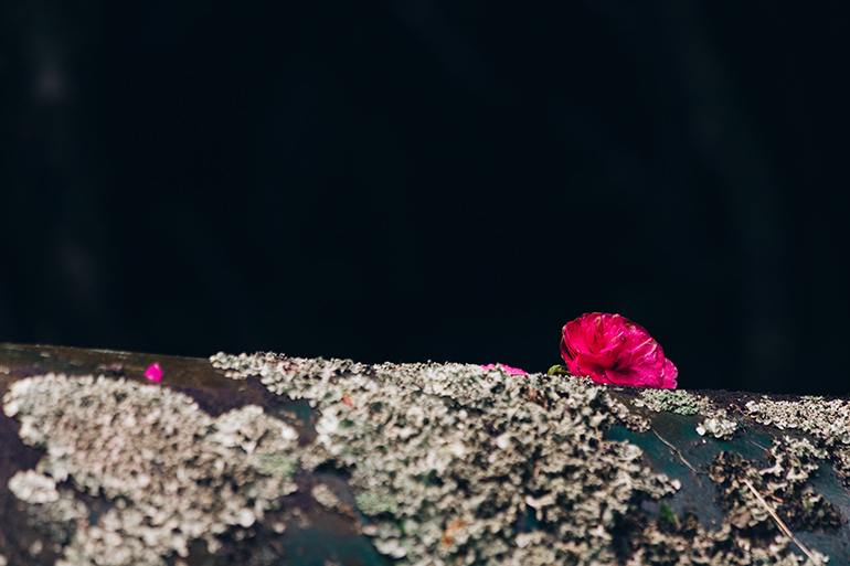 Pink flower on a pipe against a dark background.