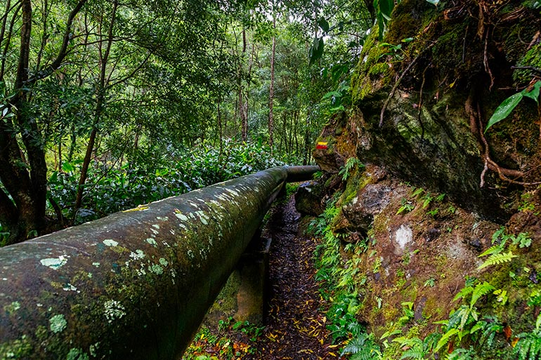 A large pipe with surrounded by trees in the forest.