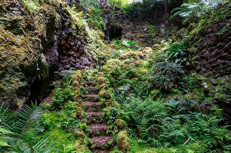A rock staircase overgrown with greenery.