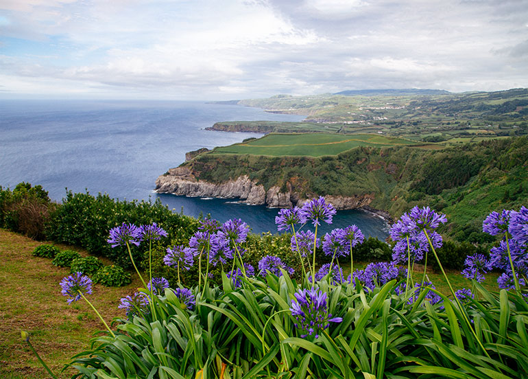 A stunning vista overlooking rocky and grass covered cliffs in the background, purple flowers in the foreground. The view from Miradouro De Santa Iria.