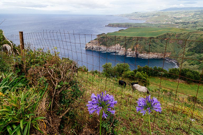 A view of grassy cliffs, ocean, flowers and grazing horses.