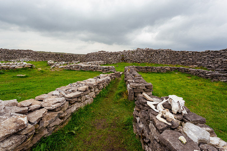 An animal skull lays on the remnants of Caherconnell Fort in the Burren.