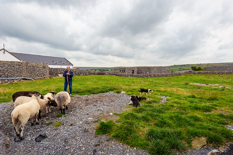 A shepherd stands next to sheep and three sheep dogs lay on the ground.
