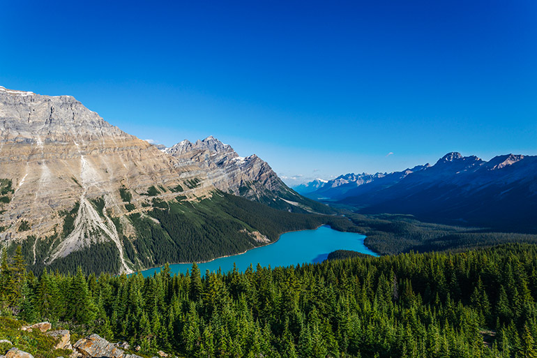 Peyto Lake as seen from the timberline trail, Banff National Park.