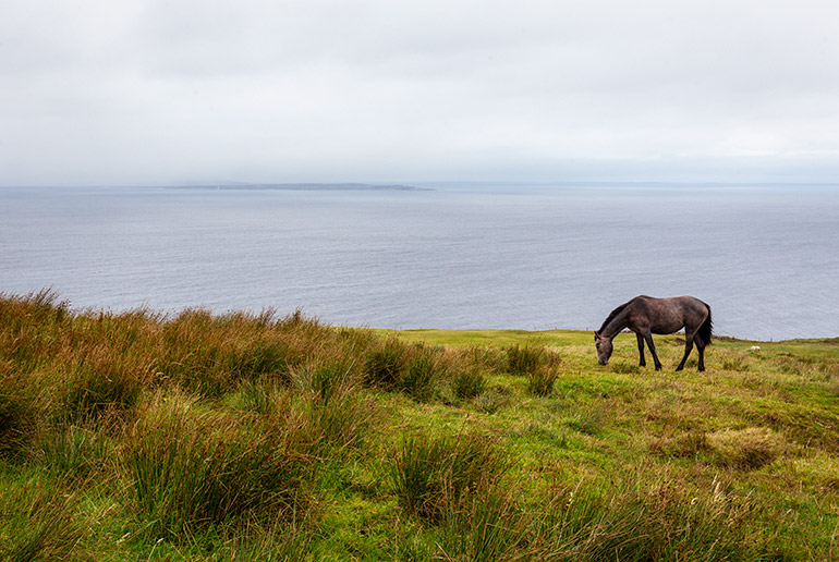 A horse near irelands cliffs of Moher, a complete guide to renting a car in Ireland.