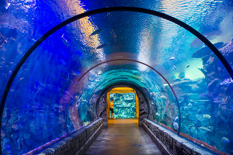 Mandalay Bay Aquarium, one of the attractions to visit on the seven day Las Vegas Itinerary.