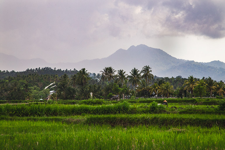 The plantations in northern Lombok, Indonesia.