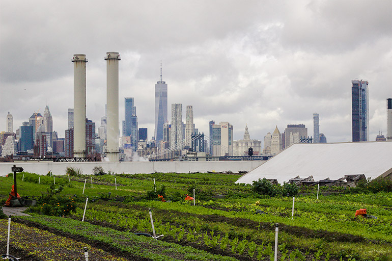 View of downtown NYC from Brooklyn Grange, downtown Brooklyn's farm.