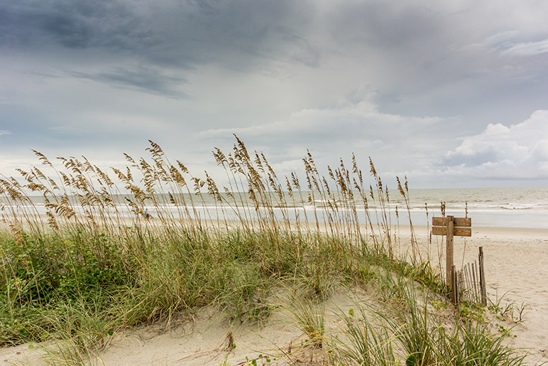 Sand dunes at outer banks of North Carolina beach resort.