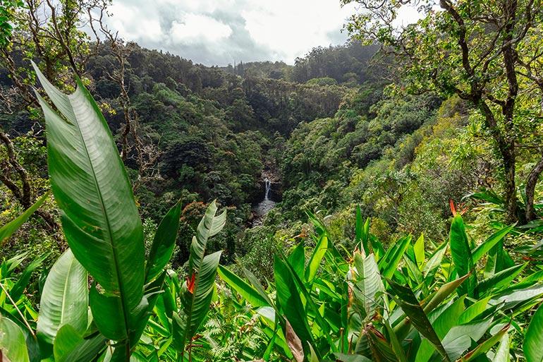 Garden of Eden Arboretum, Maui, Hawaii.