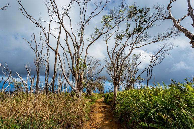 Cloudy sky and the path towards Wailea ridge, Maui Itinerary, Day 5